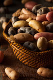 Raw Organic Fingerling Potatoes Royalty Free Stock Photography
