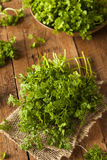 Raw Organic French Parsley Chervil. On a Background Royalty Free Stock Photos