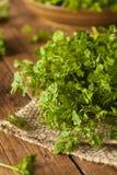 Raw Organic French Parsley Chervil Stock Image