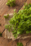 Raw Organic French Parsley Chervil. On a Background Stock Photos