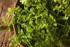 Raw Organic French Parsley Chervil Royalty Free Stock Images