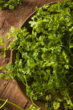 Raw Organic French Parsley Chervil. On a Background Stock Photo