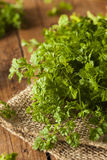 Raw Organic French Parsley Chervil. On a Background Royalty Free Stock Photography