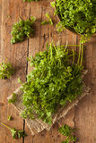 Raw Organic French Parsley Chervil. On a Background Stock Photography