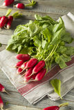 Raw Organic Fresh French Radishes. Ready to Eat Royalty Free Stock Photo