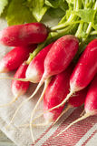 Raw Organic Fresh French Radishes. Ready to Eat Royalty Free Stock Images