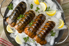 Raw Organic Fresh Lobster Tails Royalty Free Stock Images
