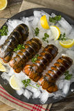 Raw Organic Fresh Lobster Tails Royalty Free Stock Photo
