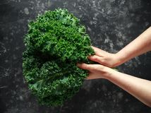 Raw organic freshly picked green curly kale on black table Royalty Free Stock Photo