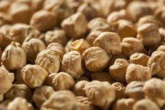 Raw Organic Garbanzo Beans Stock Images
