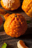 Raw Organic Gold Nugget Mandarin Oranges. Ready to Eat Royalty Free Stock Photo