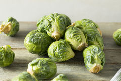 Raw Organic Green Brussel Sprouts. Ready to Cook With Royalty Free Stock Image