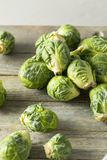 Raw Organic Green Brussel Sprouts. Ready to Cook With Royalty Free Stock Photos
