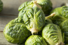 Raw Organic Green Brussel Sprouts. Ready to Cook With Royalty Free Stock Photography
