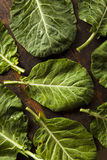 Raw Organic Green Collard Greens Royalty Free Stock Photography