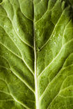 Raw Organic Green Collard Greens Stock Photography