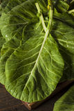 Raw Organic Green Collard Greens Royalty Free Stock Photos