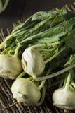 Raw Organic Green Kohlrabi. In a Bunch Stock Image