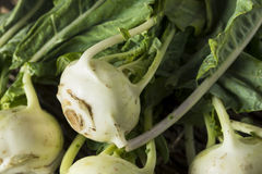 Raw Organic Green Kohlrabi. In a Bunch Royalty Free Stock Images