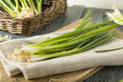 Raw Organic Green Onions Stock Photos