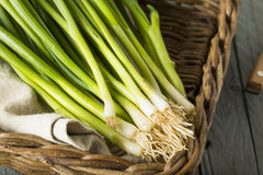 Raw Organic Green Onions Stock Photo