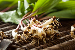Raw Organic Green Ramps Royalty Free Stock Photography
