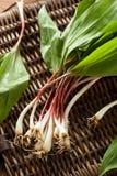 Raw Organic Green Ramps Royalty Free Stock Photo