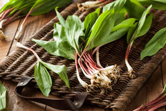 Raw Organic Green Ramps. Ready to Cook With Royalty Free Stock Photography