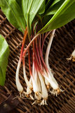 Raw Organic Green Ramps. Ready to Cook With Royalty Free Stock Image