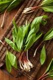 Raw Organic Green Ramps Stock Photo