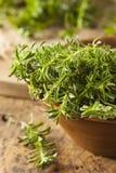 Raw Organic Green Savory Royalty Free Stock Photo