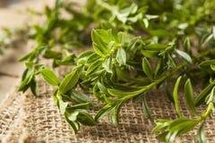 Raw Organic Green Savory Stock Photo