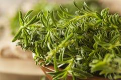 Raw Organic Green Savory Royalty Free Stock Images