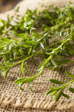 Raw Organic Green Savory. Herb in a Bunch Royalty Free Stock Photo