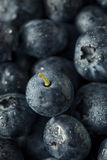 Raw Organic Healthy Blueberries. In a Bowl Stock Photos