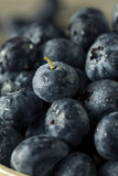 Raw Organic Healthy Blueberries. In a Bowl Royalty Free Stock Photography