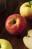 Raw Organic Honeycrisp Apples. Ready to Eat Stock Photography