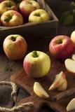 Raw Organic Honeycrisp Apples. Ready to Eat Stock Image