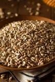 Raw Organic Hulled Sunflower Seeds Royalty Free Stock Image