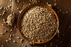 Raw Organic Hulled Sunflower Seeds Royalty Free Stock Photos