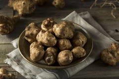 Raw Organic Jerusalem Artichoke Sunchokes Royalty Free Stock Images