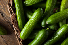 Raw Organic Mini Baby Cucumbers Stock Photo