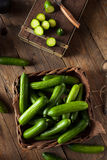Raw Organic Mini Baby Cucumbers Stock Images