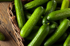 Raw Organic Mini Baby Cucumbers Stock Image