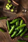 Raw Organic Mini Baby Cucumbers Royalty Free Stock Photo