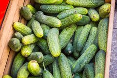 Raw Organic Mini Baby Cucumbers Ready to Eat stock images