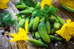 Raw Organic Mini  Cucumbers Stock Image