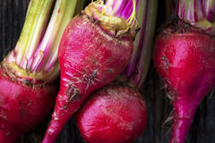 Raw Organic Miniature Red Candy Stripe Beets. Organic miniature red candy stripe raw beets Stock Images