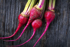 Raw Organic Miniature Red Candy Stripe Beets Royalty Free Stock Photography
