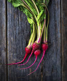 Raw Organic Miniature Red Candy Stripe Beets. Organic miniature red candy stripe raw beets Royalty Free Stock Photo